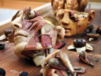 REDAZ_musei_anatomia2